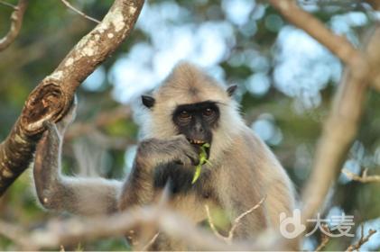 知名动物科普达人跟你聊聊斯里兰卡动物的秘密
