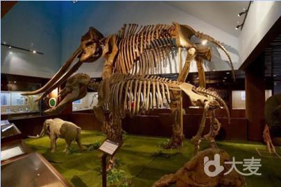 【亲子科普探秘】走进古动物博物馆,送化石!